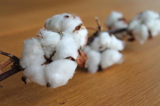 tejidos moda sostenible algodón